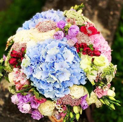 Kytička modro-ružová, veľká