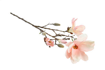 Magnolia Spray Chaica M, rosa