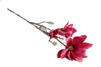 Magnolia Spray Chaica M, fuchsia - 1