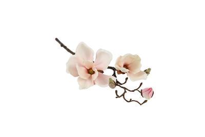 Magnolia Spray Chaica M, creme - 1