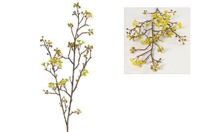 Prunus Jamasakura Vika žltý - 1