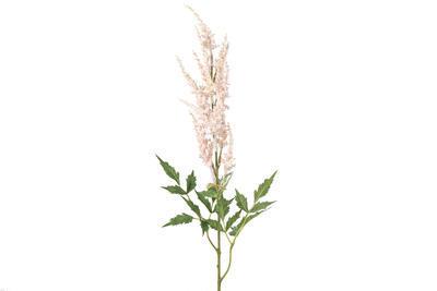 Astilbe - Spiraea Kasia, ružové - 1