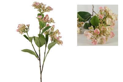 Viburnum zweig Daisy rosa - 1