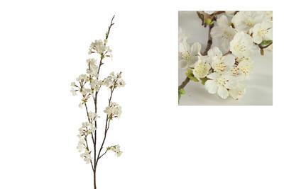 Vetvička čerešne - čerešňa, biela - 1