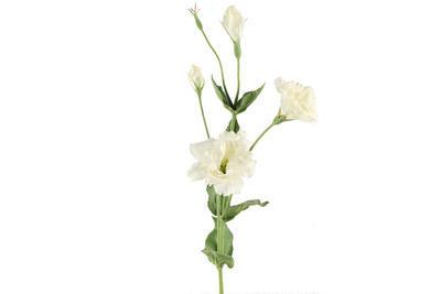 Eustoma - Lisianthus umelý kvet, biela - 1