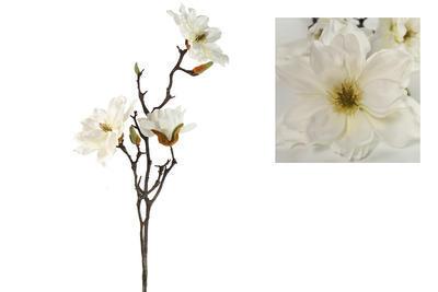 Magnolia Rani, biela - 1