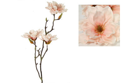 Magnolia Rani, rosa - 1
