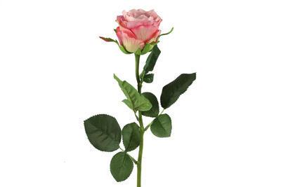 Rosa, ružová - 1