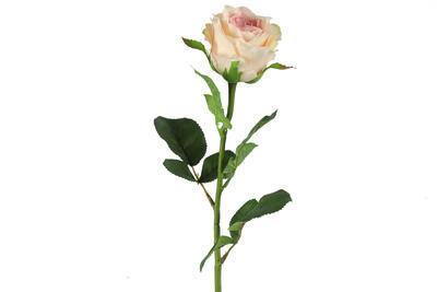 Rosa, ružovo-krémová - 1
