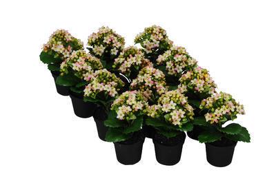 Umelý kvet v kvetináči - kalanchoe