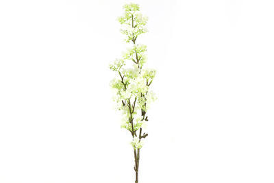 Prunus - 2