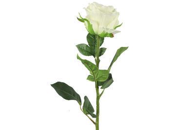 Rosa - 3